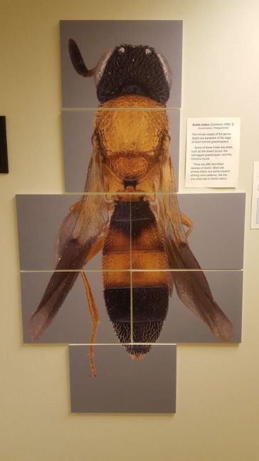 giant blown up pic of a bee